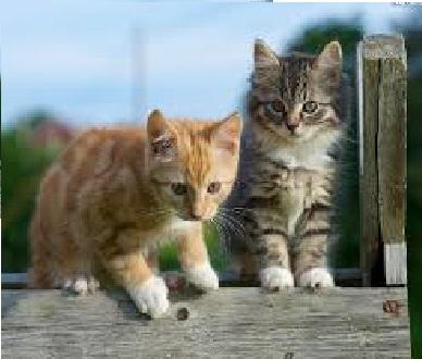 Twee kleine katten - Kleine katten Lieve kleine katten op het hek (7×7)