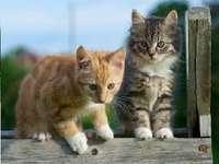 Twee kleine katten