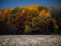 Höstskog - Fält och färgglad höstskog.
