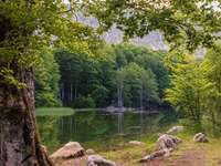 In de bossen bij het meer - Schilderachtig boslandschap.