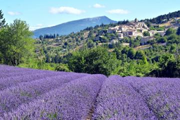 lavender field - lavender field, hill town, mountains, Provence