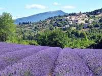 lavendelfält - lavendelfält, kulle stad, berg, Provence