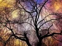 Willow i färg - Pil mot himlen.