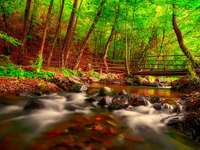 Över bäcken - I skogen ovanför bäcken.