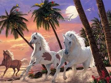 Konie na plaży. - Zwierzęta. Konie na plaży.