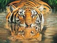 Индийски тигър.