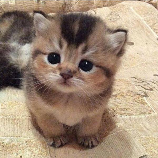 Kätzchen Katze - Froehlicher Kitty. Kitty Katze Kitty Kicius. Czarne oczy wesołekotka (4×4)