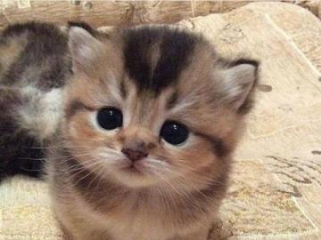 koťátko kočka - kočička kočička kočička