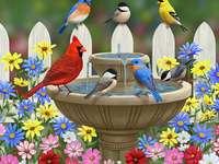 Pájaros de colores
