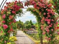 ROSES . . - Garden roses.