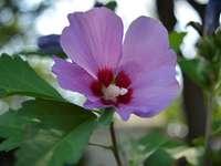 Хубаво в лилаво - Взех хубаво цвете в градината си