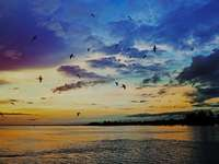 Madarak a tenger mellett