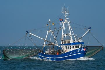 Fishing for fish - Cutter and fishermen during work.