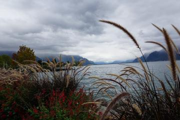 shore of the lake - Grasses and colorful flowers on the edge of the lake.
