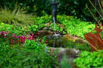 A floral garden - A small rivulet and beautiful flowers.