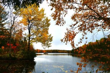 Autumn on the lake - Colorful leaves on the water. Beautiful trees are autumn.