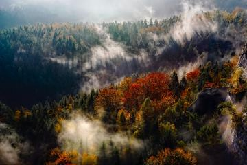 Autumnal forest - Autumnal forest at the foot of the mountains.