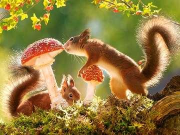 Squirrels. - Animals. Squirrels. Animals: red squirrels. Squirrels.