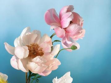 Bunte blumen - Bunte Blumen auf einem Türkishintergrund