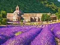 абатство сред лавандуловите полета