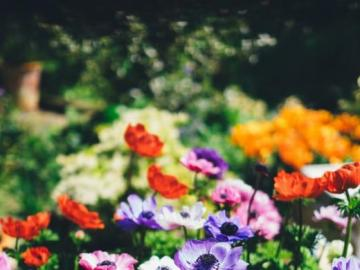Bunte Blumen am Strauch - Bunte Blumen im Garten