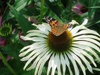 Flor e borboleta - Uma flor em um canteiro de flores à beira da lagoa.