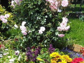 garden misz you have - first steps in decorating the garden