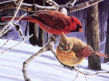 Birds: cardinals. - Animals. Birds: cardinals.