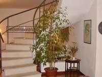 escalera helicoidal - hermosa escalera de caracol