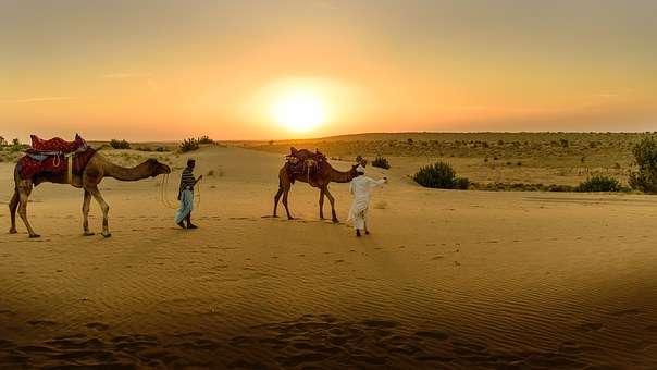 wielbłądy - trzy wielbłądy idą na pustynie