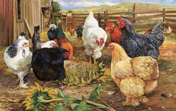 Colorful hens. - Puzzle: colorful chickens.
