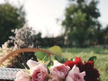 Herbaciane róże - Herbaciane róże w koszyku