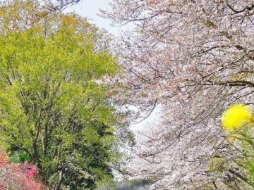 Wiosna i parowóz - Wiosna i kopcący parowóz