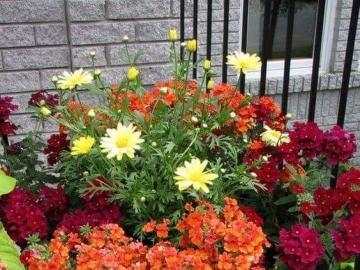 Kolorowe kwiaty w kwietniku - Kolorowe kwiaty w kwietniku