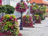 цветна улица