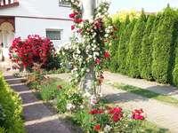 A beautiful rose garden - A beautiful rose garden in front of the house. A beautiful rose garden. A beautiful rose garden.
