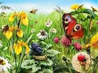 Dans le pré  - Tablou pictat. Insecte din luncă. Wildflowers flori. Puzzle. Flori. În luncă. Lunca, florile și