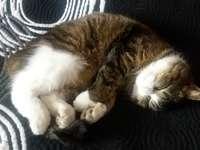 De kleine kat slaapt.
