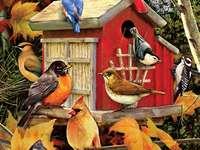 Цветни птици.