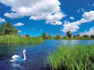 Landscape with a swan. - Landscape with a swan.