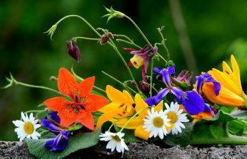 Colorful wildflowers - wild, colorful flowers in a bouquet