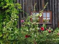 Εξοχικό σπίτι και μολόχα - Εξοχικό σπίτι και μολόχα