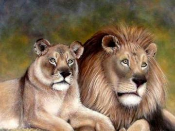 Lion's family - Beautiful animals, lion's family