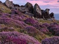Όμορφες φθινοπωρινές ρείκες - Όμορφες φθινοπωρινές ρείκες