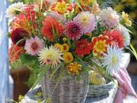 Kleurrijke dahlia's.