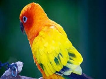 Papuga  . - Kolorowa  papuga            .