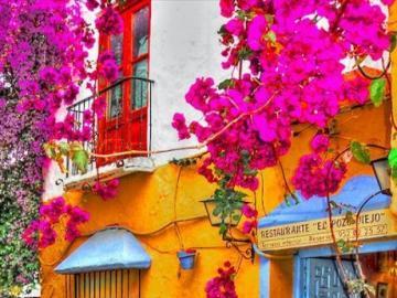 Rosa Kletterblumen - Schöne rosa Blumen, die Bäume klettern. Online-Rätsel für diejenigen, die Farben mögen! Erstaun