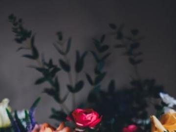 Kompozycja kwiatów na ciemnym tle - Kwiaty? Artystyczne zdjęcie przedstawiające kwiaty
