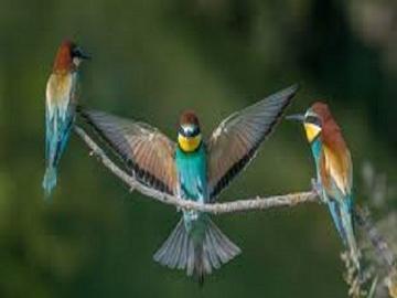 Ptaki   . - Ptaki polskie                   .