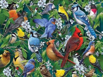 Bunte Vögel. - Puzzle: bunte Vögel.